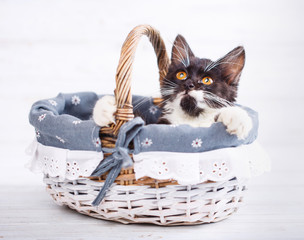 Cat clings to the basket and looking up. Isolated on a white background