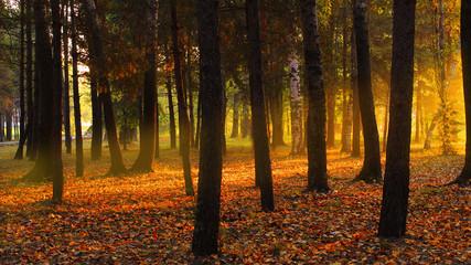 Sunrise autumn in the forest dawn landscape trees orange light october