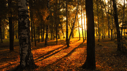 Sunrise autumn in the forest dawn landscape trees