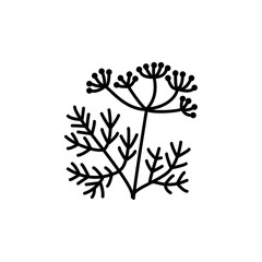 Black & white vector illustration of fennel with seeds & leaves. Line icon of aromatic & flavorful herb. Seasoning & spice. Health eating ingredient. Isolated on white background.