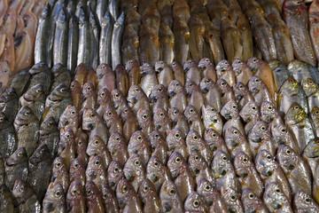 Fish restaurants