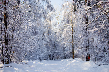 Picturesque photo of snowy trees in forest