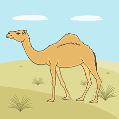 single-horned camel  vector cartoon
