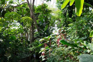 Botanic garden in Berlin