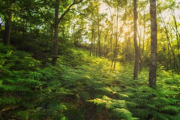 bosque francés