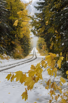 A snow covered road framed by fall foliage in Washington state