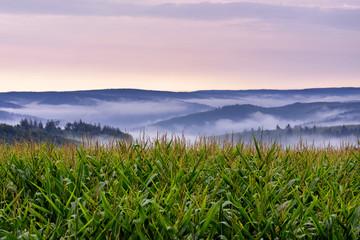 morning foggy valley