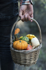 man with a basket full of pumpkins