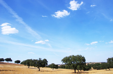 landscape of Alentejo region, south of Portugal