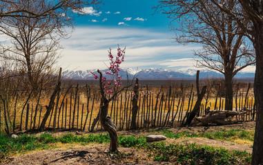 Los Andes - Barreal - San Juan - Argentina