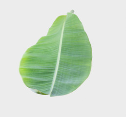 banana leaf Isolated on white background with clipping path.
