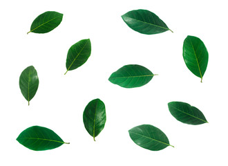 Isolated leaves on the white background. it is Beauty.