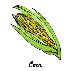 Calligraphy coloured corn poster