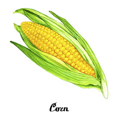 Nature watercolour corn poster