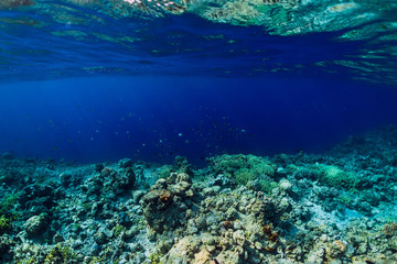 Tropical underwater world with corals and school of fish. Blue ocean in tropics