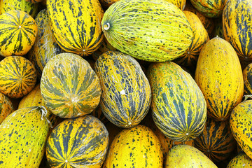 Ripe melons, natural and organic yellow melons, a large amount of melon pile,