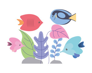fishes with plants foliage wild scene