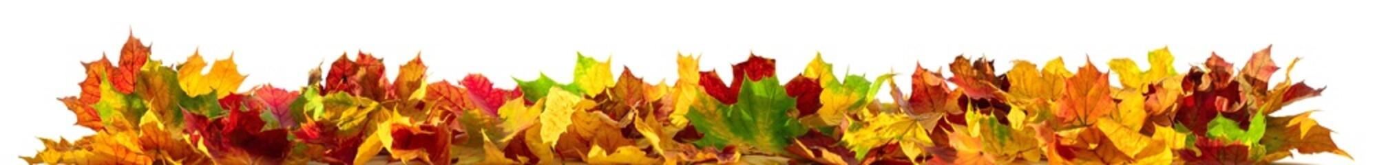 Bunte Blätter als Rand, Herbst Verzierung isoliert auf weiß