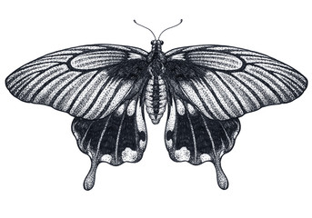 Beautiful Butterfly tattoo sketch. Tropical Butterfly. Papilio Memnon. Dotwork tattoo. Traditional black dot style ink.