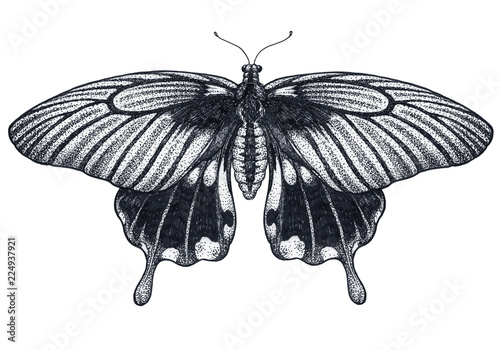 6d08c82b574f4 Beautiful Butterfly tattoo sketch. Tropical Butterfly. Papilio Memnon.  Dotwork tattoo. Traditional black dot style ink.