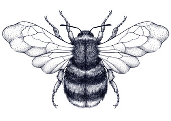 Honeybee tattoo. Dotwork tattoo. Mystical symbol of diligence, economy, purity, immortality, fertility and chastity