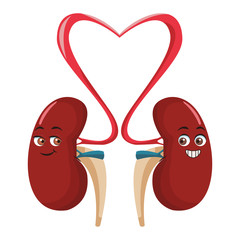 Kidneys funny cartoon