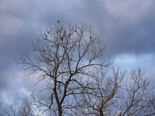 Silhouette of birds at the tree top