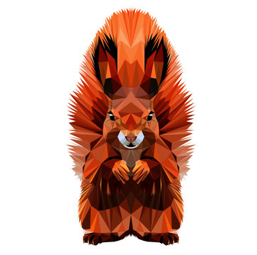 Squirrel with fluffy ears and tail, low poly triangular vector illustration isolated on grey. Polygonal style trendy modern logo design. Suitable for printing on a t-shirt.