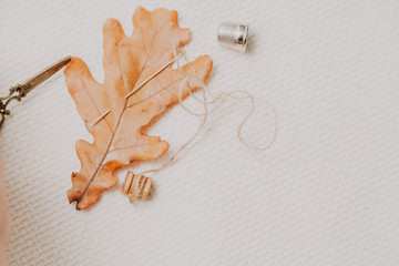 Yellow leaf of oak and needle lie on white cloth