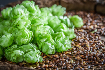 Fresh hop and malt as ingredients for beer