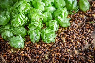 Fresh malt and hop as ingredients for beer