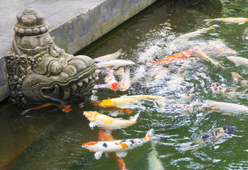 Temple fish pond with colorful Koi carp swimming near a typical Balinese Hindu stone deity figure.