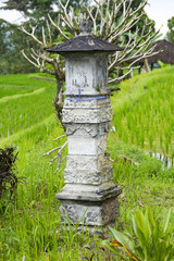 Hindu shrine placed in a rice paddy field. Bali Indonesia.