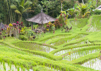 Hindu shrine or temple placed in a rice paddy field. Bali Indonesia.