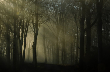 A misty morning in the dark forest, when the first rays of sunlight fight their way through the fog.