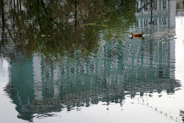 A duck swims in a pond at a park on an autumn day in Moscow