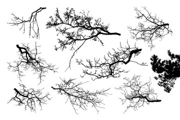 Realistic set of tree branches silhouette (Vector illustration).ai10