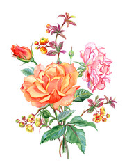 Bouquet of roses and twigs blossoming barberry, watercolor drawing on white background, isolated.