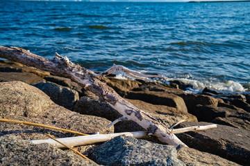 海辺の流木