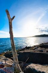 太陽に照らされる海辺の流木