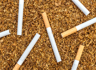 Cigarettes on background of cut tobacco. Top view.