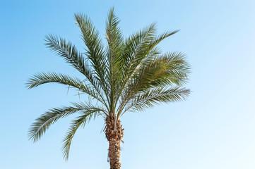 Palm against blue sky.