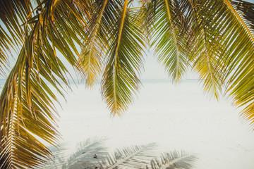 Palm tree and beach, Maldives