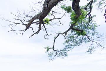 Trees and branches