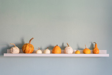 Happy Thanksgiving Background. Selection of various pumpkins on white shelf against pastel turquoise colored wall. Seasonal pumpkins room decoration. Modern minimal autumn inspired interior design.