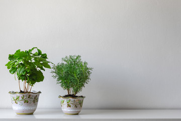 Various house plants in different pots against white wall. Indoor potted plants background with copy space. Modern room decoration.