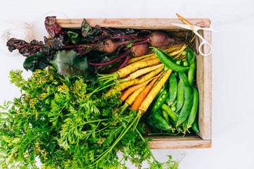 Roots fresh dirty vegetables carrots, beets and peas in wooden box on marble background, flat lay, top view