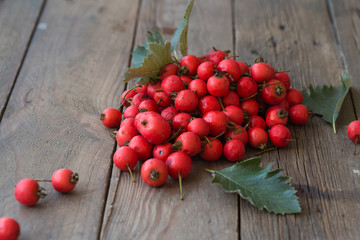 Fruit of Crataegus commonly called hawthorn, thornapple, May-tree, whitethorn, or hawberry
