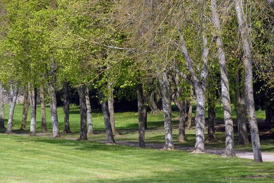 Ville de Combourg, parc du château de Combourg, arbres et chemin, département d'Ille-et-Vilaine, Bretagne, France