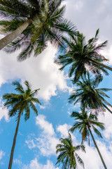Several Palm trees against blue cloudy sky